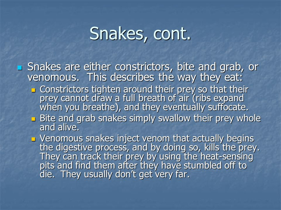 Snakes, cont. Snakes are either constrictors, bite and grab, or venomous. This describes the way they eat: Snakes are either constrictors, bite and gr