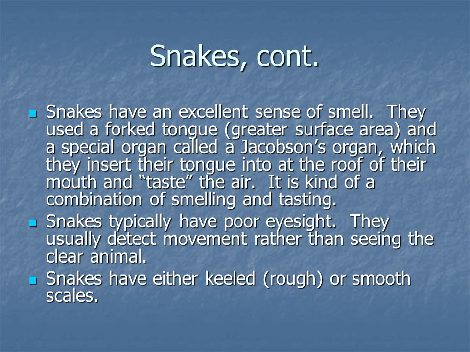 Snakes, cont. Snakes have an excellent sense of smell. They used a forked tongue (greater surface area) and a special organ called a Jacobson's organ,