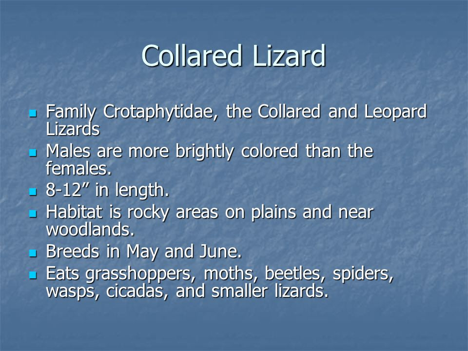 Family Crotaphytidae, the Collared and Leopard Lizards Family Crotaphytidae, the Collared and Leopard Lizards Males are more brightly colored than the