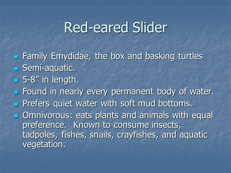 Red-eared Slider Family Emydidae, the box and basking turtles Family Emydidae, the box and basking turtles Semi-aquatic.