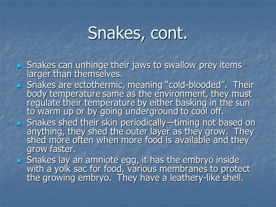 Snakes, cont. Snakes can unhinge their jaws to swallow prey items larger than themselves.