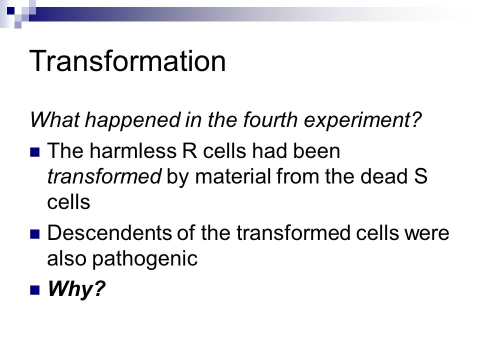 What happened in the fourth experiment? The harmless R cells had been transformed by material from the dead S cells Descendents of the transformed cel