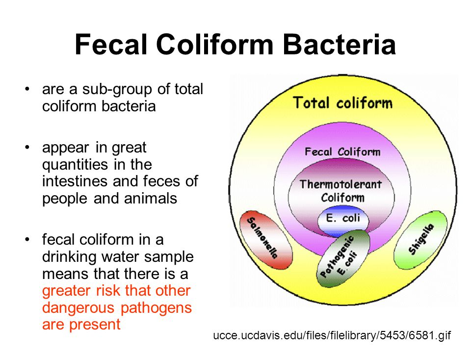 Fecal Coliform Bacteria are a sub-group of total coliform bacteria appear in great quantities in the intestines and feces of people and animals fecal coliform in a drinking water sample means that there is a greater risk that other dangerous pathogens are present ucce.ucdavis.edu/files/filelibrary/5453/6581.gif
