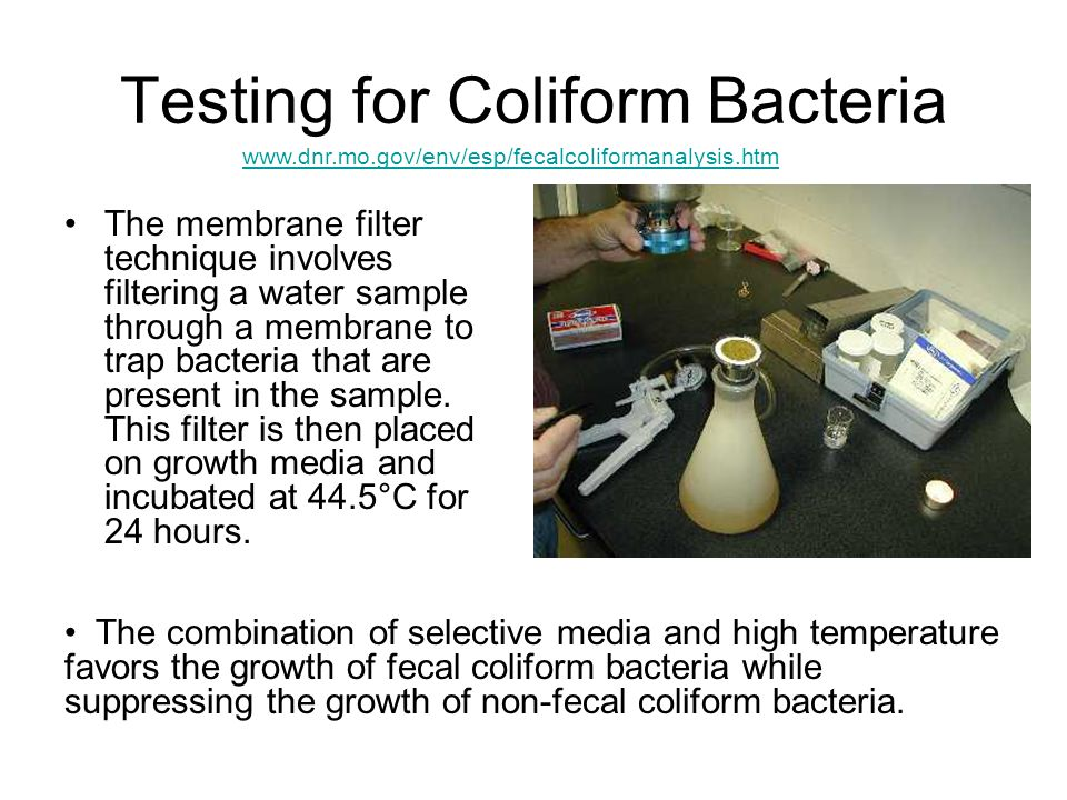 Testing for Coliform Bacteria The membrane filter technique involves filtering a water sample through a membrane to trap bacteria that are present in the sample.