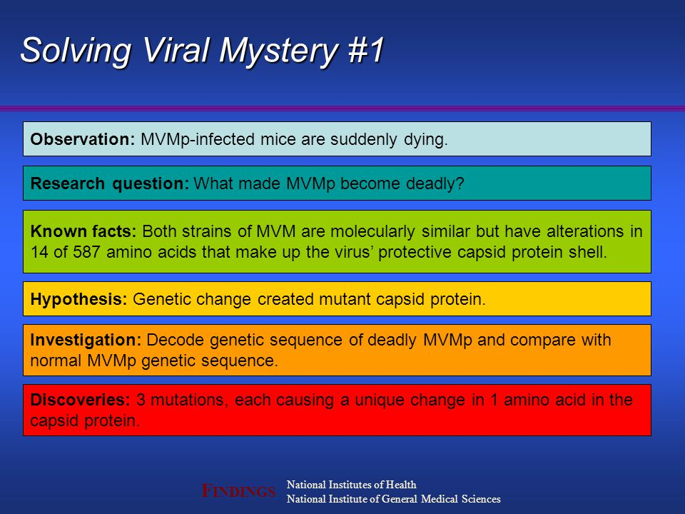F INDINGS National Institutes of Health National Institute of General Medical Sciences Solving Viral Mystery #1 Observation: MVMp-infected mice are suddenly dying.