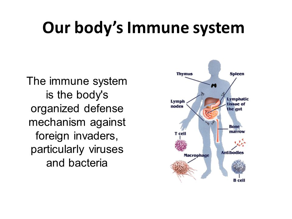 Our body's Immune system The immune system is the body's organized defense mechanism against foreign invaders, particularly viruses and bacteria
