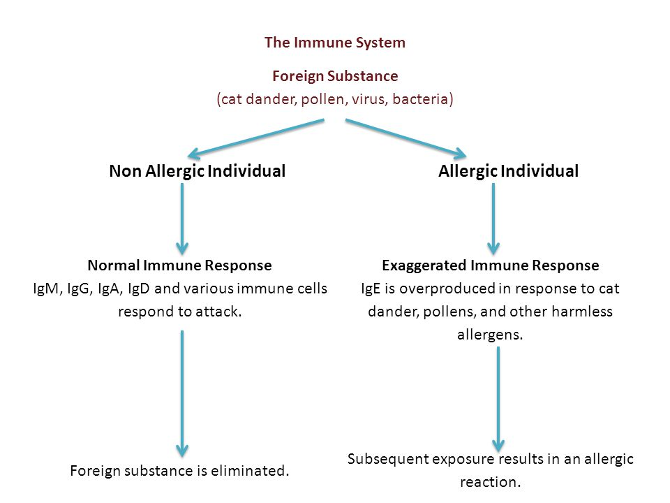 The Immune System Foreign Substance (cat dander, pollen, virus, bacteria) Non Allergic Individual Allergic Individual Normal Immune Response IgM, IgG,