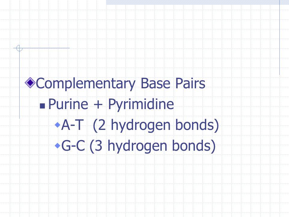Complementary Base Pairs Purine + Pyrimidine  A-T (2 hydrogen bonds)  G-C (3 hydrogen bonds)