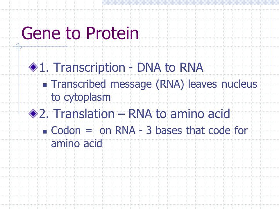 Gene to Protein 1.