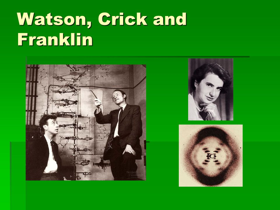 Watson, Crick and Franklin