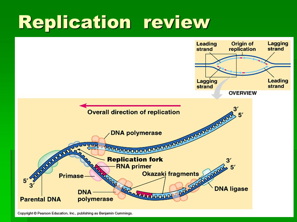 Replication review