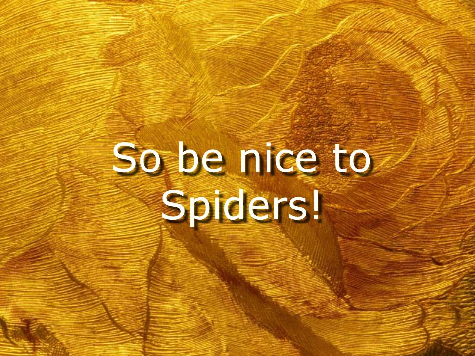 Tarantulas Make Good Pets h They are quiet and not smelly h They like to be held h They live up to twenty years h They don't need much space h They are cute h They are quiet and not smelly h They like to be held h They live up to twenty years h They don't need much space h They are cute