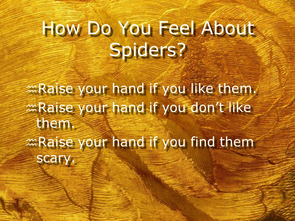 So be nice to Spiders!