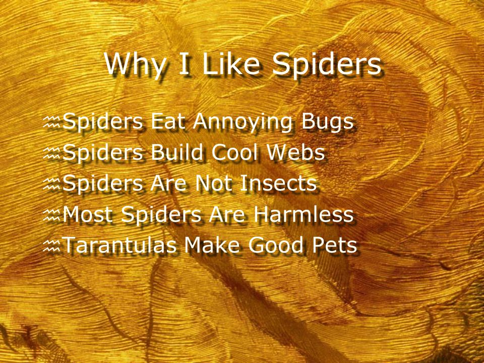 How Do You Feel About Spiders. h Raise your hand if you like them.