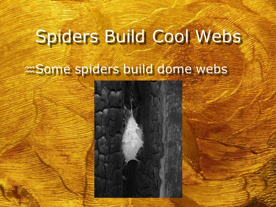 Spiders Build Cool Webs h Some spiders build orb webs