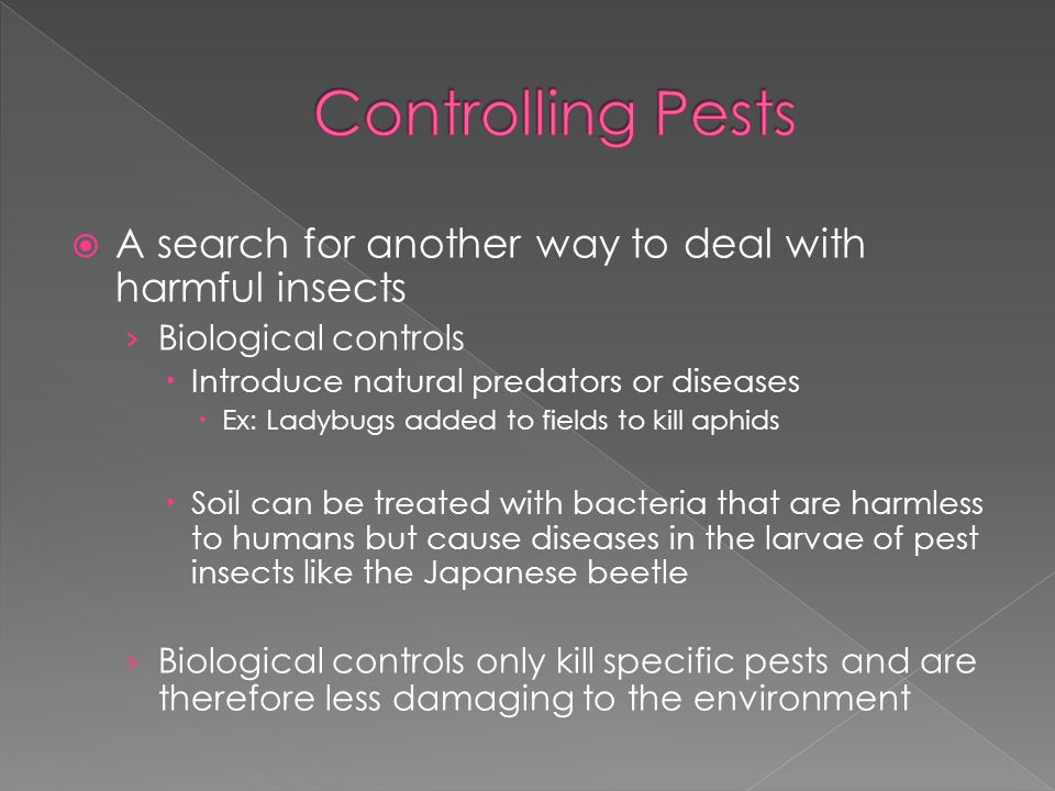  A search for another way to deal with harmful insects › Biological controls  Introduce natural predators or diseases  Ex: Ladybugs added to fields