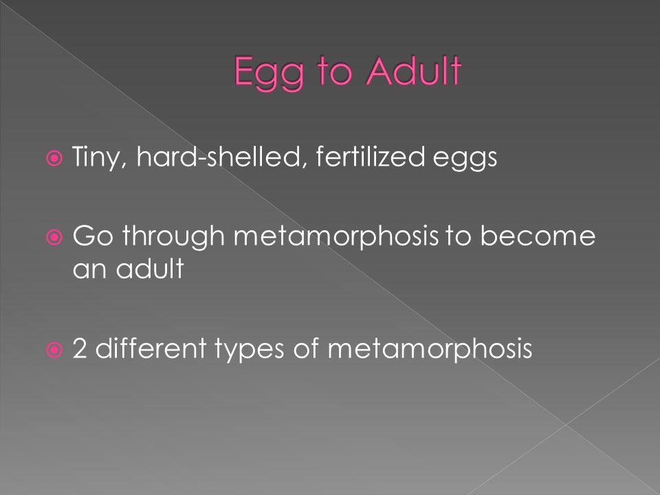  2 types of metamorphosis 1. Complete metamorphosis 2. Gradual metamorphosis