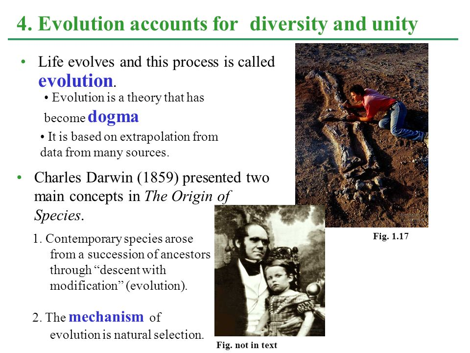 4. Evolution accounts for diversity and unity Life evolves and this process is called evolution.