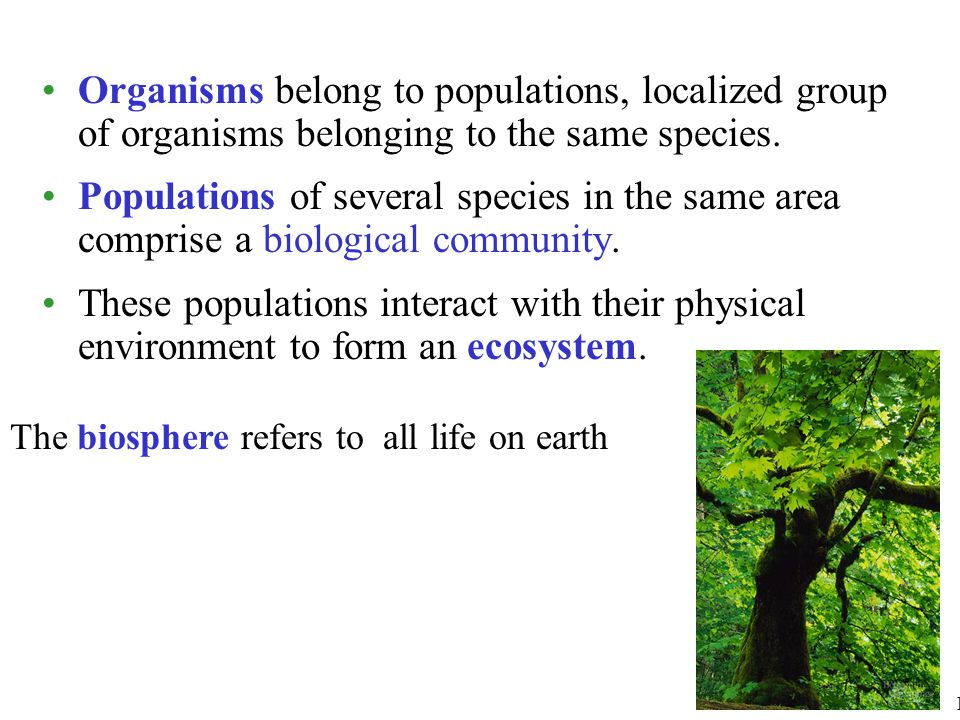 Organisms belong to populations, localized group of organisms belonging to the same species.