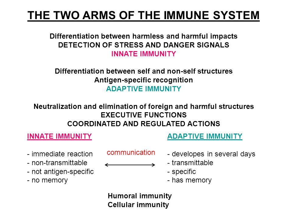 THE TWO ARMS OF THE IMMUNE SYSTEM Differentiation between harmless and harmful impacts DETECTION OF STRESS AND DANGER SIGNALS INNATE IMMUNITY Differentiation between self and non-self structures Antigen-specific recognition ADAPTIVE IMMUNITY Neutralization and elimination of foreign and harmful structures EXECUTIVE FUNCTIONS COORDINATED AND REGULATED ACTIONS INNATE IMMUNITY - immediate reaction - non-transmittable - not antigen-specific - no memory ADAPTIVE IMMUNITY - developes in several days - transmittable - specific - has memory Humoral immunity Cellular immunity communication