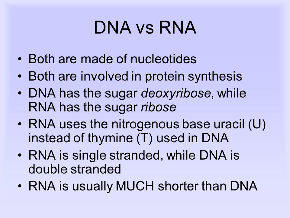 DNA vs RNA Both are made of nucleotides Both are involved in protein synthesis DNA has the sugar deoxyribose, while RNA has the sugar ribose RNA uses the nitrogenous base uracil (U) instead of thymine (T) used in DNA RNA is single stranded, while DNA is double stranded RNA is usually MUCH shorter than DNA