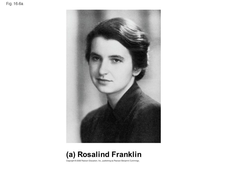 Fig. 16-6a (a) Rosalind Franklin