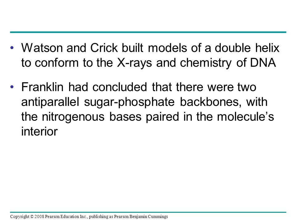 Watson and Crick built models of a double helix to conform to the X-rays and chemistry of DNA Franklin had concluded that there were two antiparallel