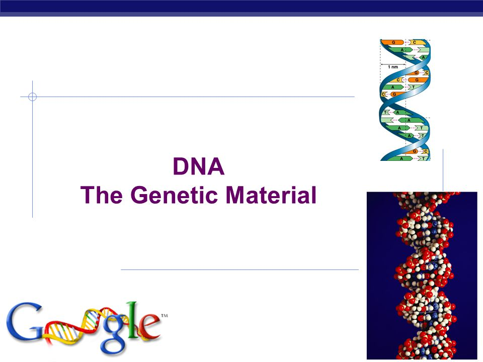 AP Biology 2006-2007 DNA The Genetic Material