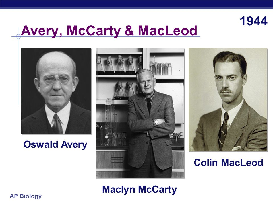AP Biology Avery, McCarty & MacLeod Oswald Avery Maclyn McCarty Colin MacLeod 1944