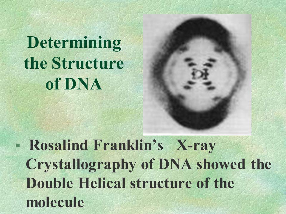 Determining the Structure of DNA Chargoff determined: Amount Adenine = Amount Thymine Amount Guanine = Amount Cytosine Nitrogen base pairing