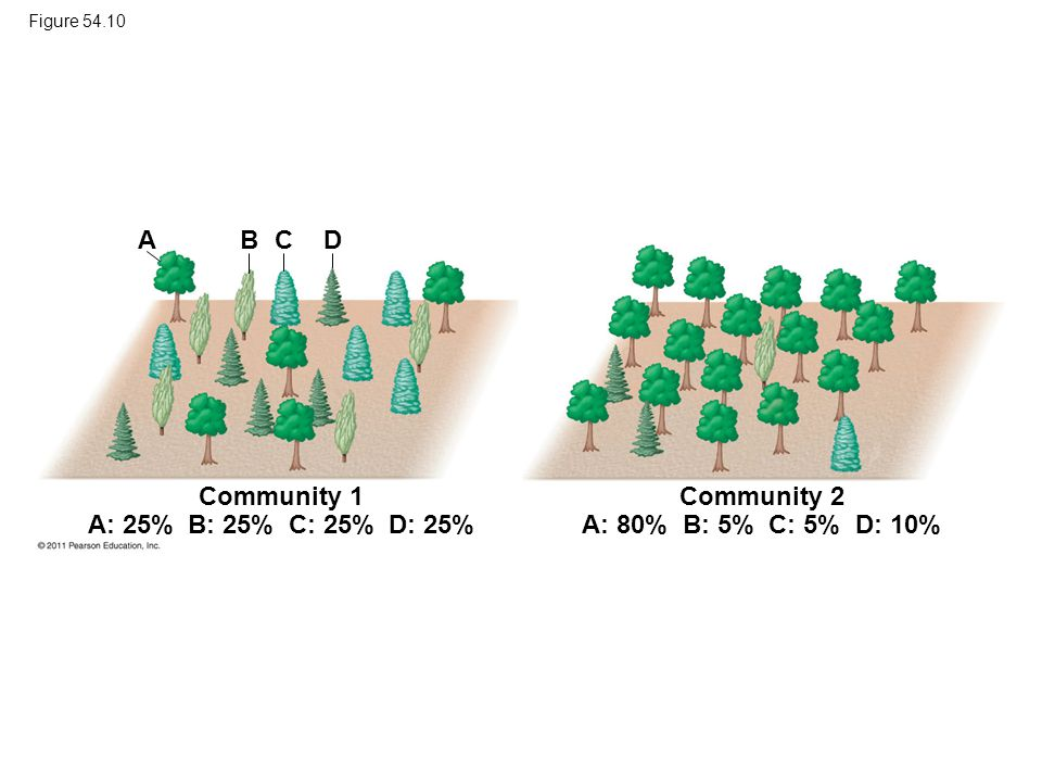 Communities with higher diversity are –More productive and more stable in their productivity –Better able to withstand and recover from environmental stresses –More resistant to invasive species, organisms that become established outside their native range © 2011 Pearson Education, Inc.