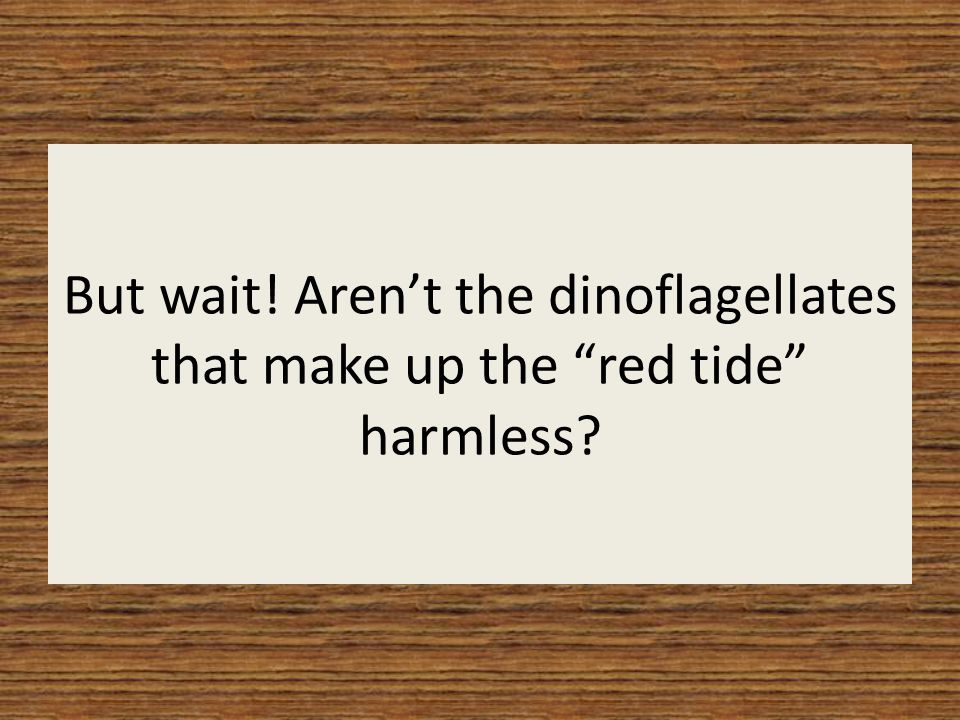 But wait! Aren't the dinoflagellates that make up the red tide harmless