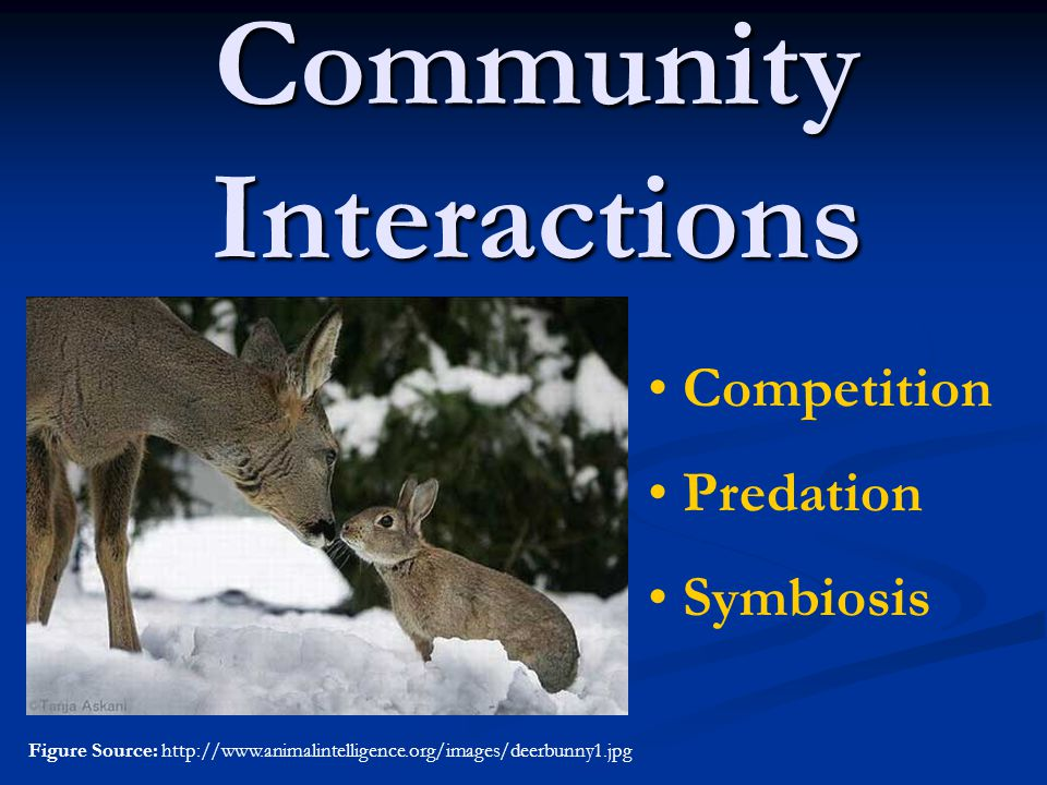 Checking your understanding– Quick Questions 1.What is a community.