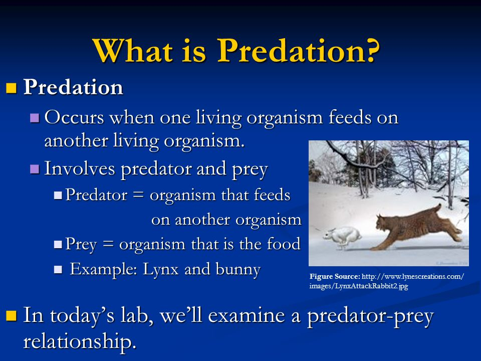 What is Predation? Predation Predation Occurs when one living organism feeds on another living organism. Occurs when one living organism feeds on anot