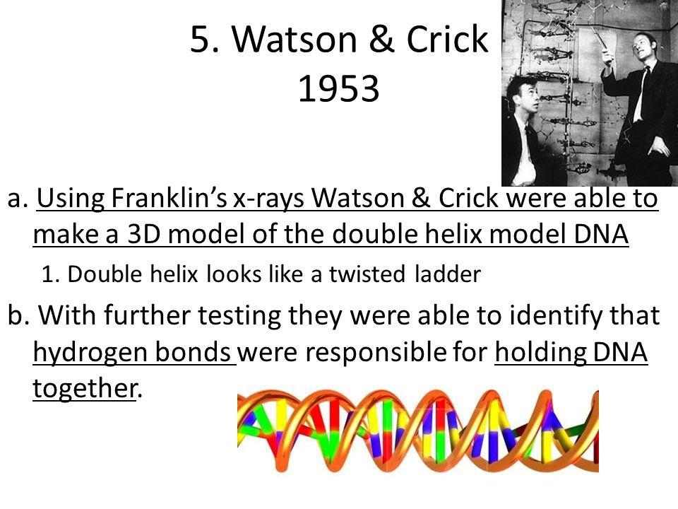 5. Watson & Crick 1953 a.