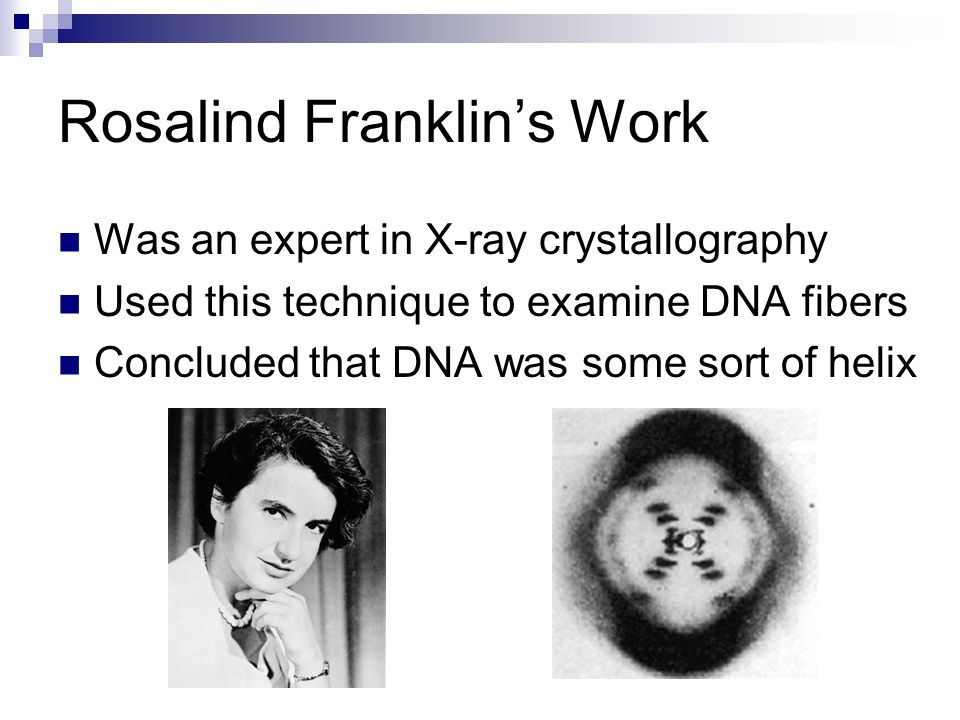 Rosalind Franklin's Work Was an expert in X-ray crystallography Used this technique to examine DNA fibers Concluded that DNA was some sort of helix
