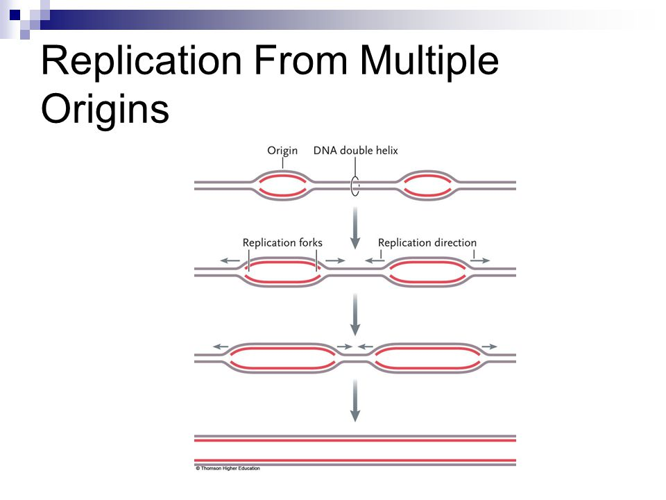 Replication From Multiple Origins