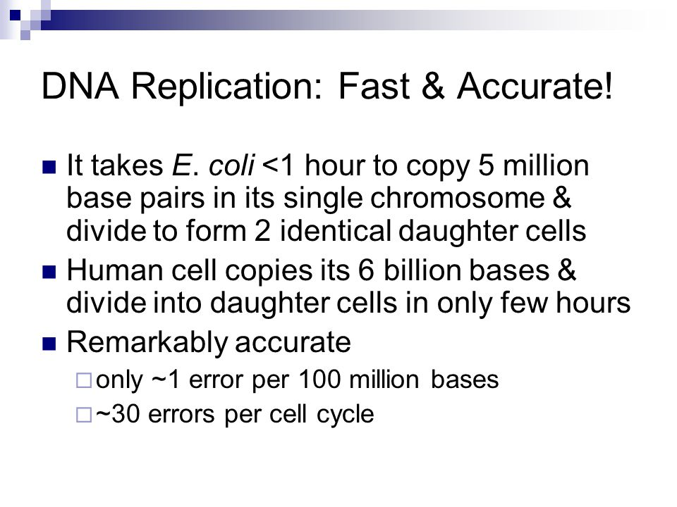 DNA Replication: Fast & Accurate! It takes E. coli <1 hour to copy 5 million base pairs in its single chromosome & divide to form 2 identical daughter