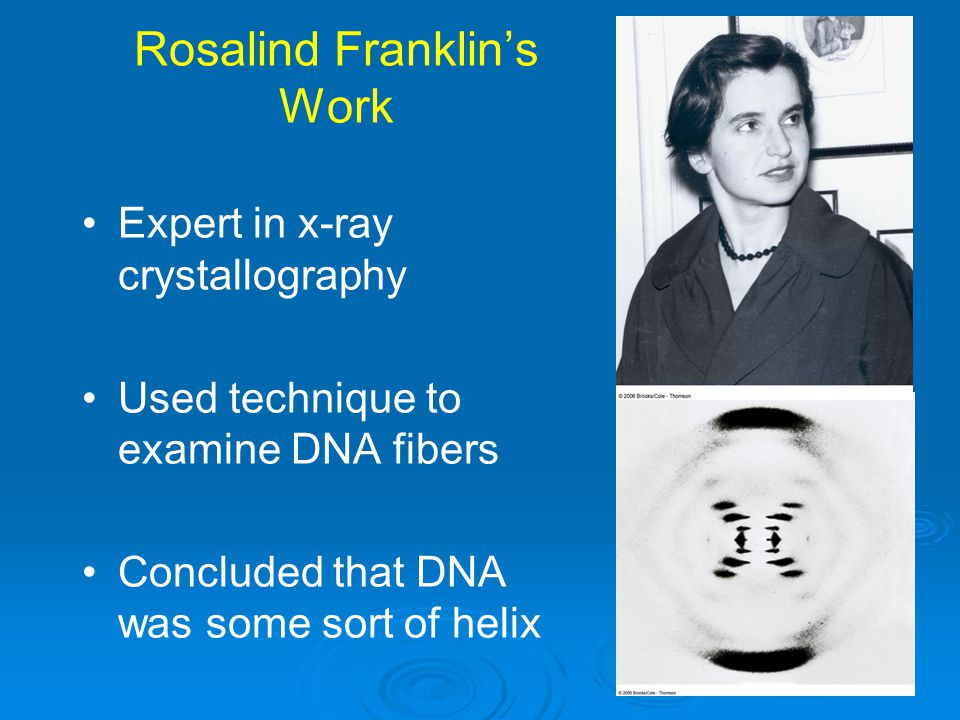 Rosalind Franklin's Work Expert in x-ray crystallography Used technique to examine DNA fibers Concluded that DNA was some sort of helix
