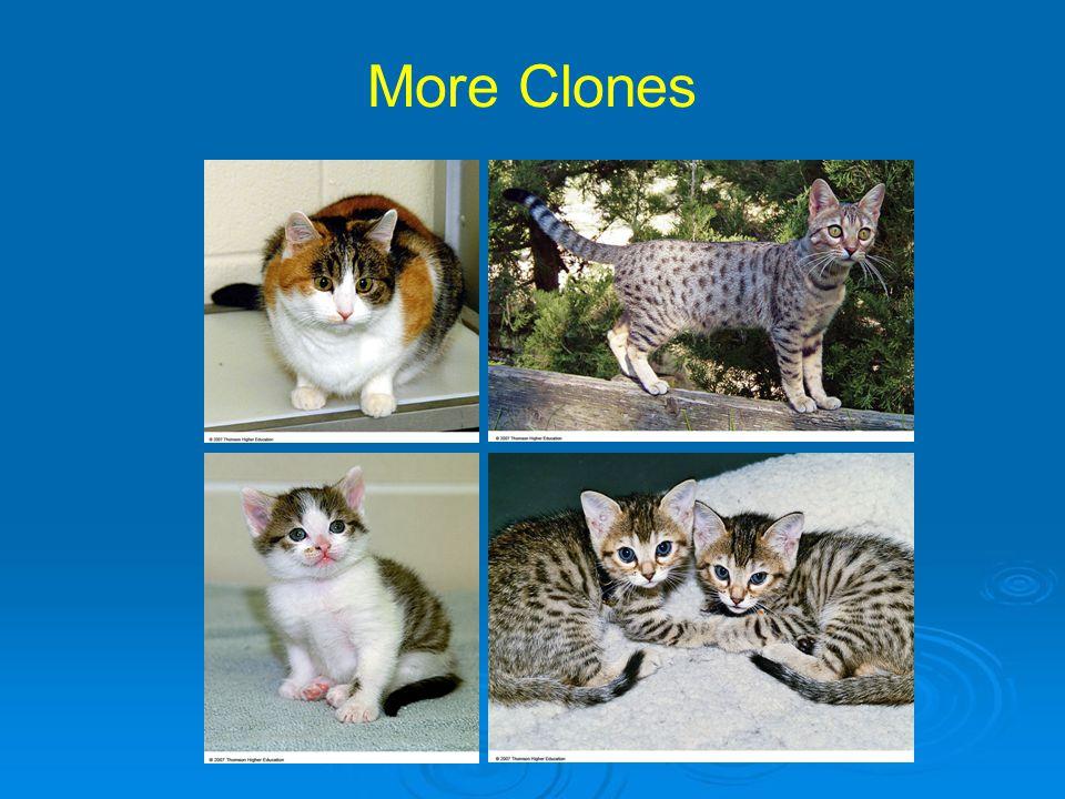 More Clones