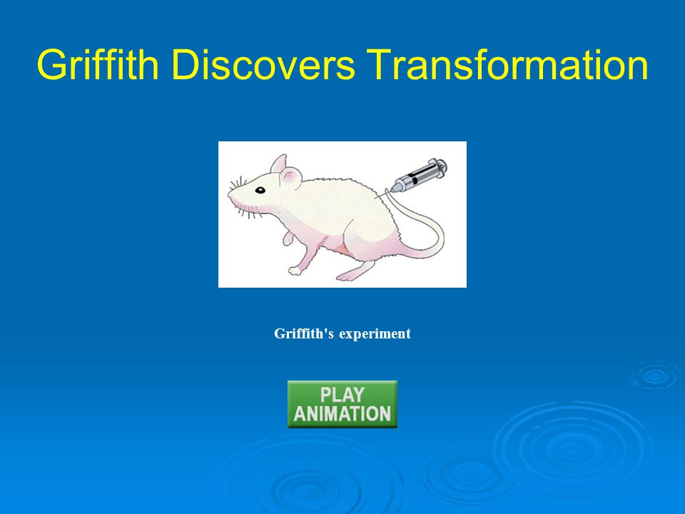Griffith s experiment Griffith Discovers Transformation