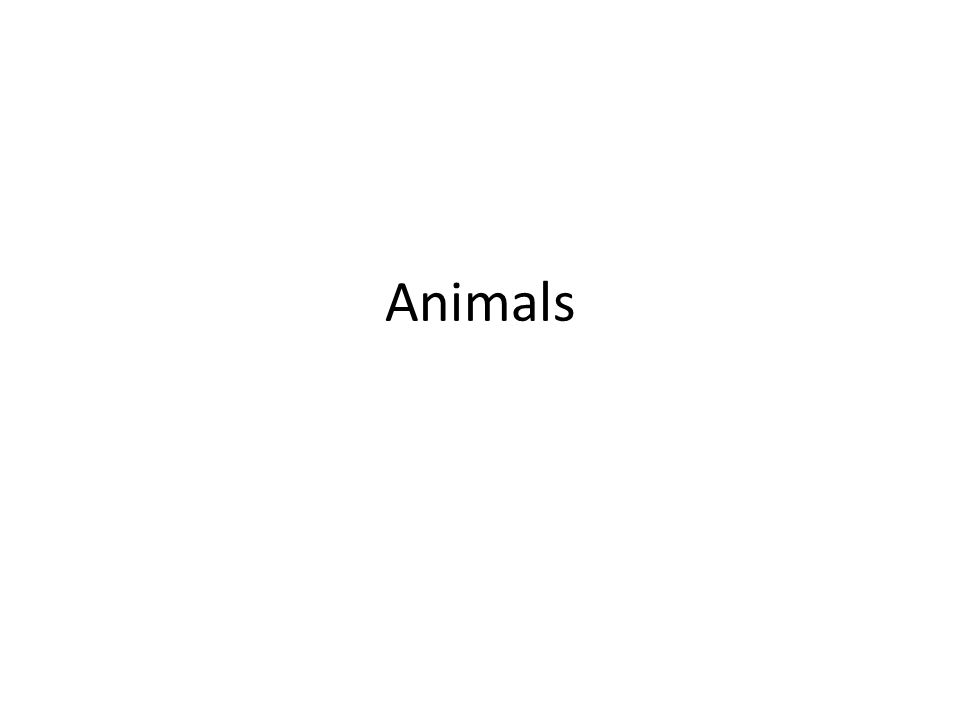 Animal Types All animals are grouped as either an invertebrate or a vertebrate.