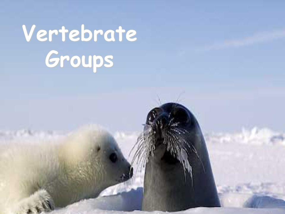 Vertebrate Groups
