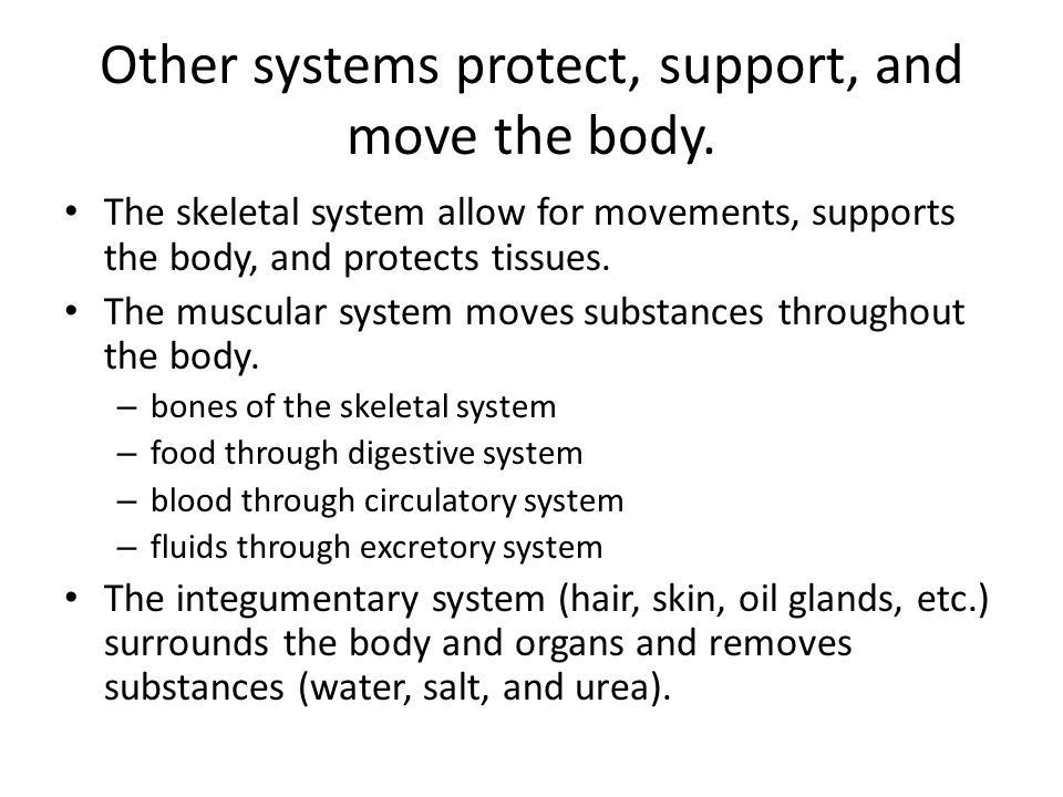 Other systems protect, support, and move the body. The skeletal system allow for movements, supports the body, and protects tissues. The muscular syst