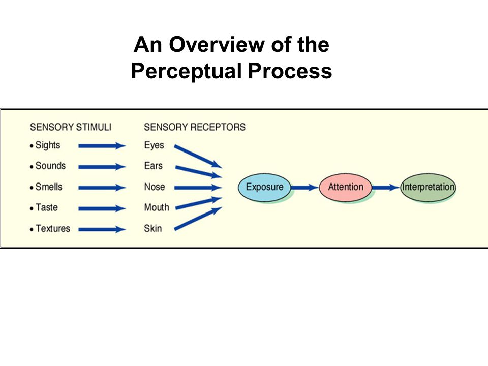 An Overview of the Perceptual Process