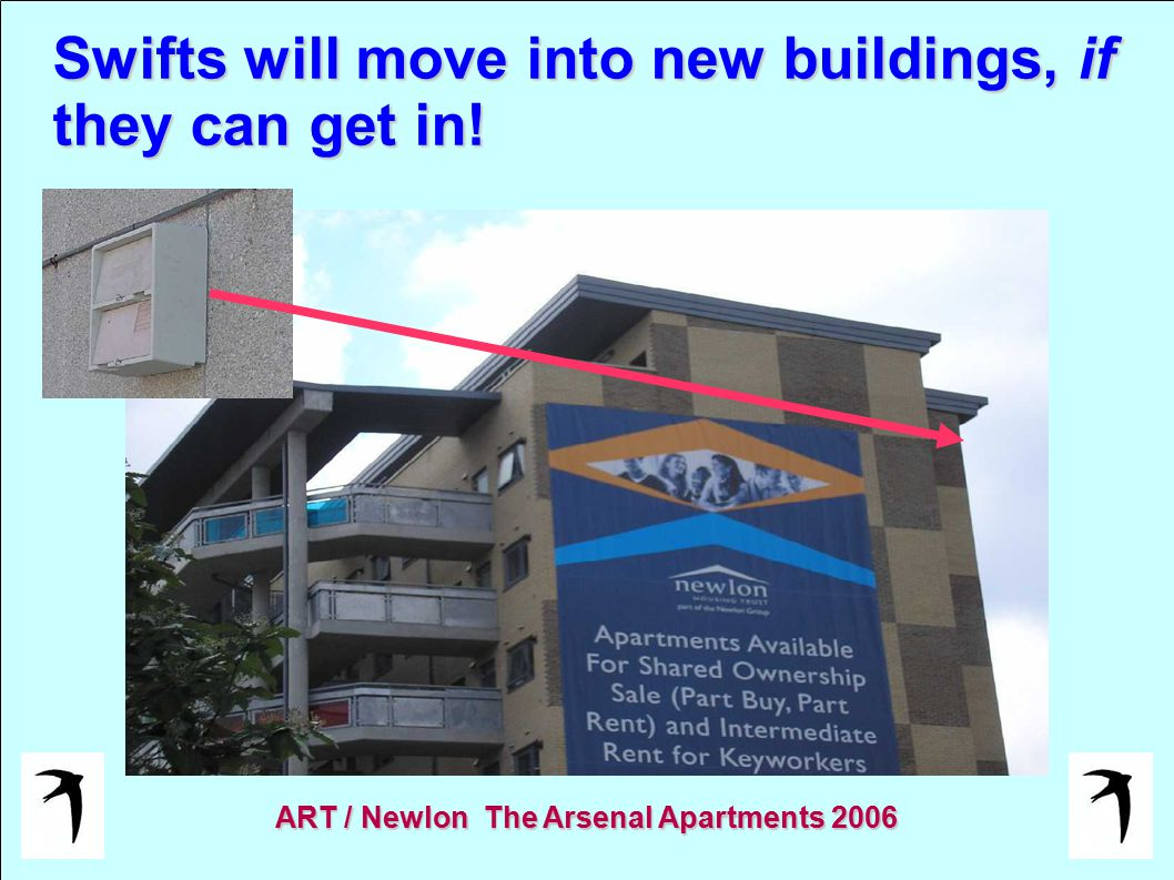 Swifts will move into new buildings, if they can get in! ART / Newlon The Arsenal Apartments 2006