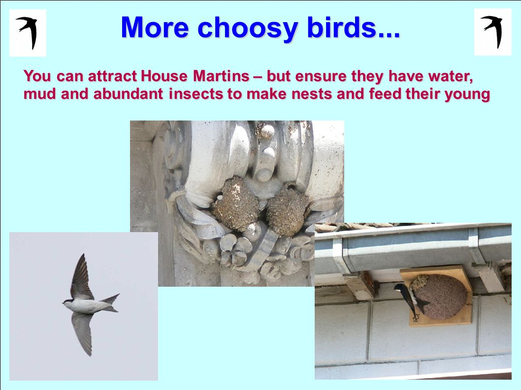 More choosy birds... You can attract House Martins – but ensure they have water, mud and abundant insects to make nests and feed their young