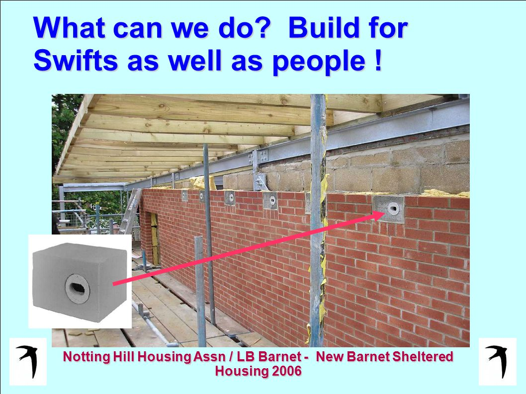 What can we do? Build for Swifts as well as people ! Notting Hill Housing Assn / LB Barnet - New Barnet Sheltered Housing 2006