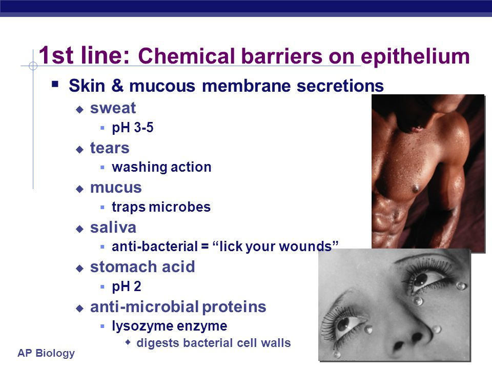AP Biology 1st line: External defense  Physical & chemical defenses  non-specific defense  external barrier  epithelial cells & mucus membranes 