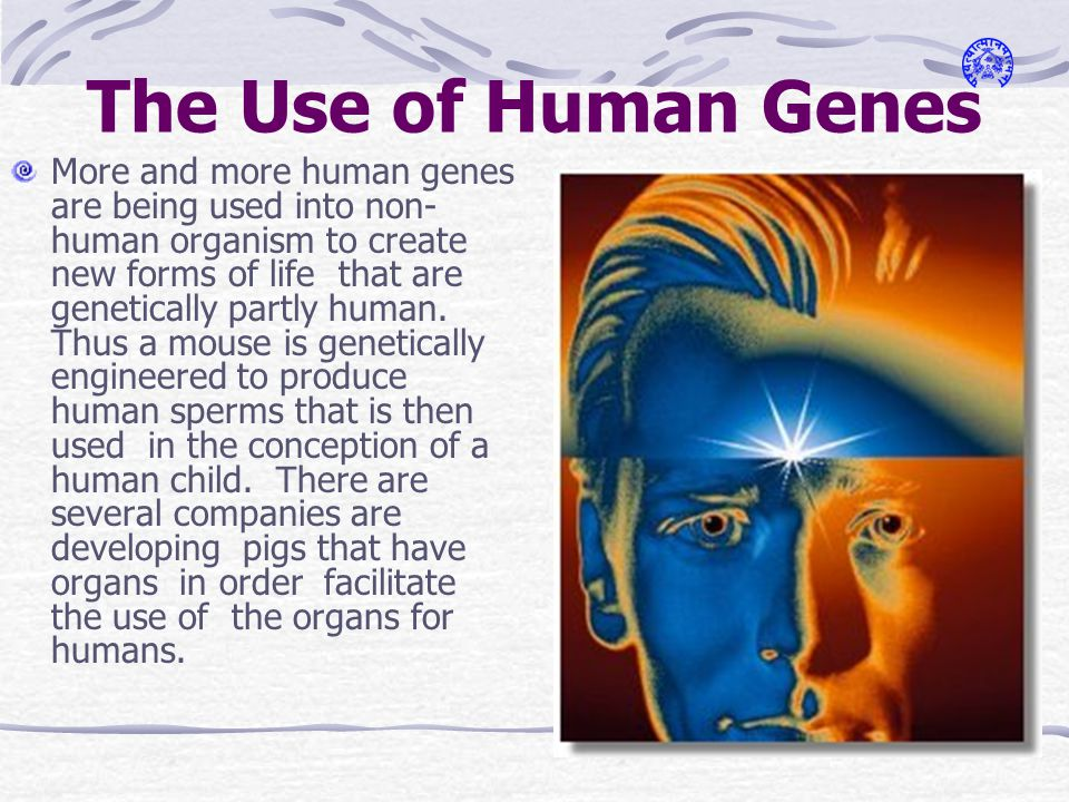 The Use of Human Genes More and more human genes are being used into non- human organism to create new forms of life that are genetically partly human.